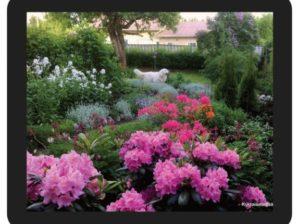 Kukkaiselämää-hiirimatto, Mikki ja alppiruusut
