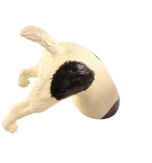 Puutarhakoriste, Koira, mustilla laikuilla